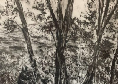 David Cote - Autumn Grove - Charcoal