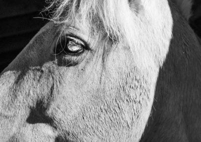 Jean Stimmell - Equus - Photograph