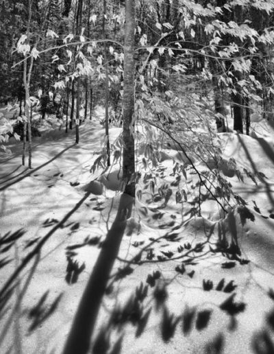 Gillian Martlew - Winter as Artist - Photograph - $225