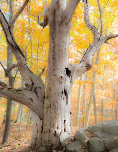 Jean Stimmell - Enchanted Forest - Photograph - $200
